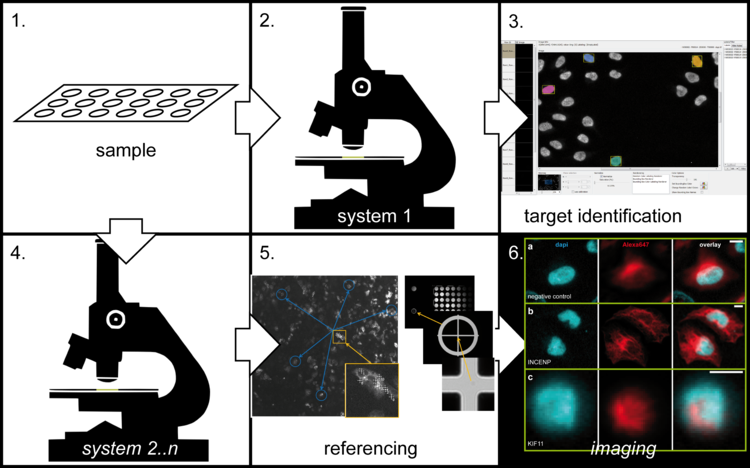 Exemplary approach: Sample preparation (1.) and imaging using the first system (2.). Identification and marking of interesting areas (3.). Transferring the sample (4.) and referencing it (5.) on another microscope. Automatic relocalization and imaging of the previously identified areas using the second system (6.).