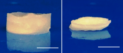 Photographs of the cBSA structure (5 % (w/v)): completely filled with water (left) and after emptying by mechanical squeezing (right), Scale: 0,5 cm [Source: KIT].